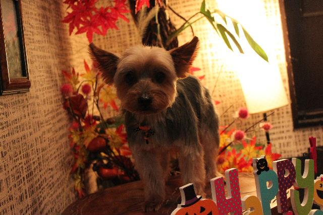 本日11月1日で、犬濯屋 川村は「5周年」を迎えました!!_b0130018_20125489.jpg