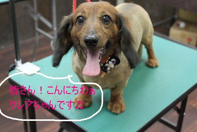 本日11月1日で、犬濯屋 川村は「5周年」を迎えました!!_b0130018_20142311.jpg