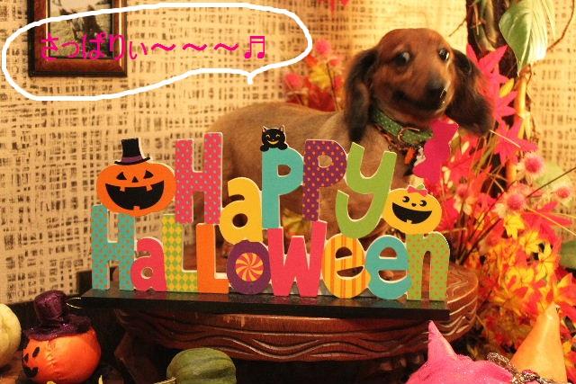 本日11月1日で、犬濯屋 川村は「5周年」を迎えました!!_b0130018_2014334.jpg