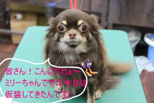 本日11月1日で、犬濯屋 川村は「5周年」を迎えました!!_b0130018_202397.jpg
