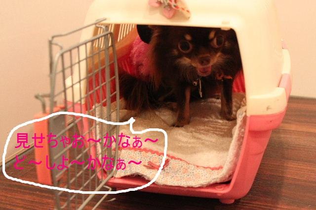 本日11月1日で、犬濯屋 川村は「5周年」を迎えました!!_b0130018_2025310.jpg