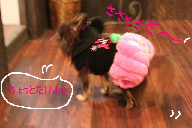 本日11月1日で、犬濯屋 川村は「5周年」を迎えました!!_b0130018_2025852.jpg