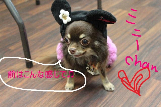 本日11月1日で、犬濯屋 川村は「5周年」を迎えました!!_b0130018_2031538.jpg
