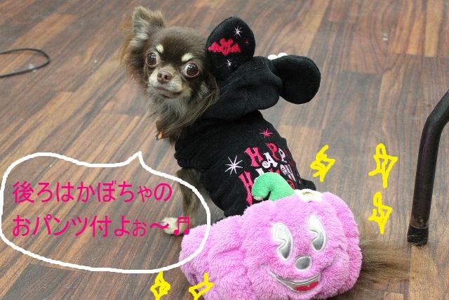 本日11月1日で、犬濯屋 川村は「5周年」を迎えました!!_b0130018_2032272.jpg