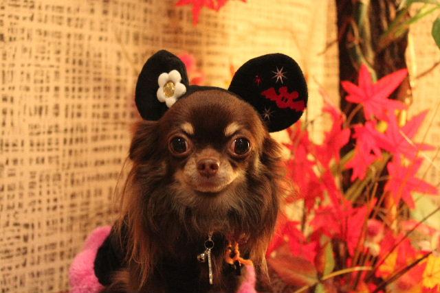 本日11月1日で、犬濯屋 川村は「5周年」を迎えました!!_b0130018_2032786.jpg