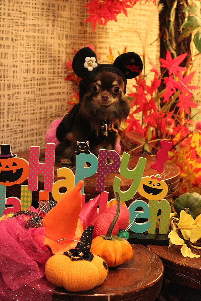 本日11月1日で、犬濯屋 川村は「5周年」を迎えました!!_b0130018_2033316.jpg