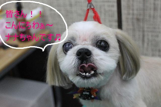 本日11月1日で、犬濯屋 川村は「5周年」を迎えました!!_b0130018_2044695.jpg