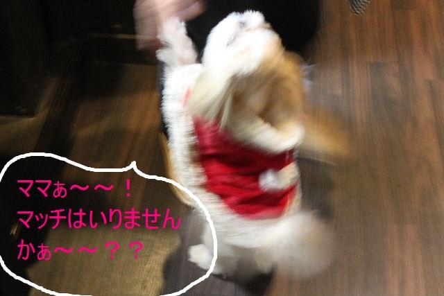 本日11月1日で、犬濯屋 川村は「5周年」を迎えました!!_b0130018_2051665.jpg