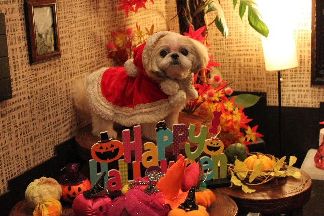 本日11月1日で、犬濯屋 川村は「5周年」を迎えました!!_b0130018_2052365.jpg