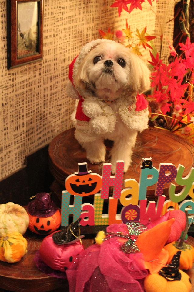 本日11月1日で、犬濯屋 川村は「5周年」を迎えました!!_b0130018_2053116.jpg