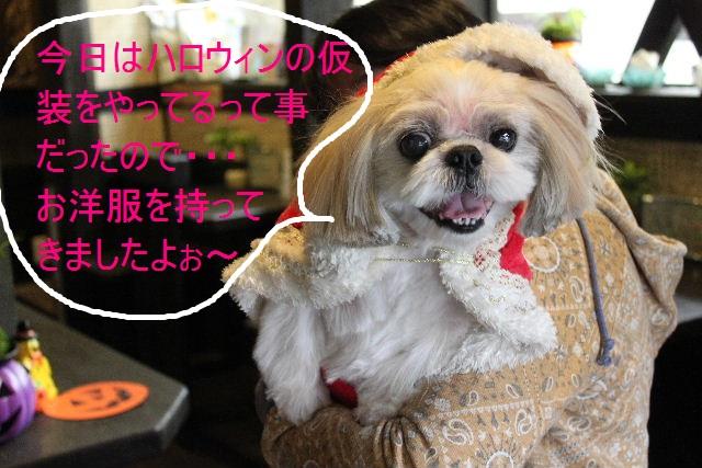 本日11月1日で、犬濯屋 川村は「5周年」を迎えました!!_b0130018_205332.jpg