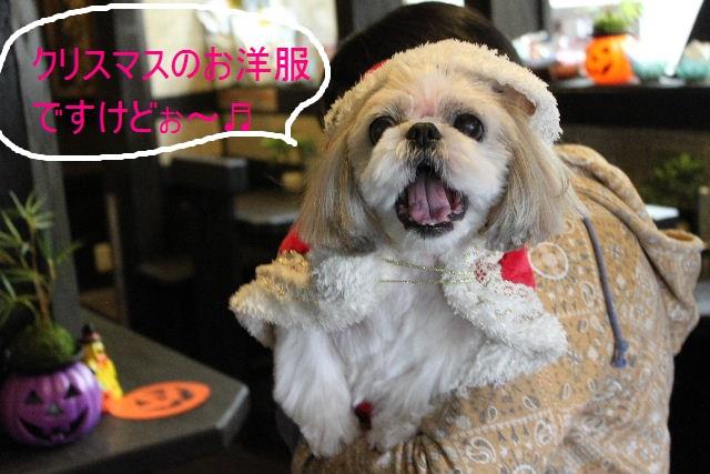 本日11月1日で、犬濯屋 川村は「5周年」を迎えました!!_b0130018_205949.jpg