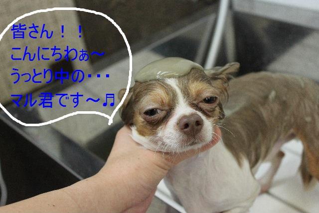 本日11月1日で、犬濯屋 川村は「5周年」を迎えました!!_b0130018_2063897.jpg