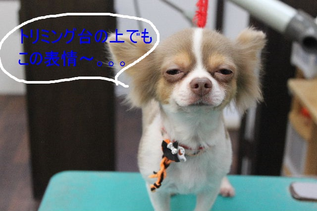 本日11月1日で、犬濯屋 川村は「5周年」を迎えました!!_b0130018_2072371.jpg