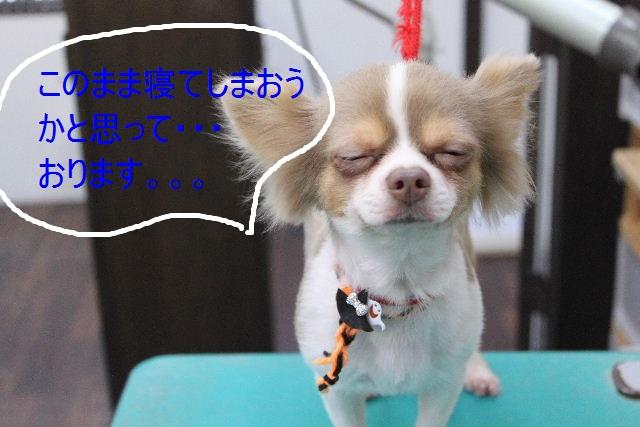 本日11月1日で、犬濯屋 川村は「5周年」を迎えました!!_b0130018_2072747.jpg