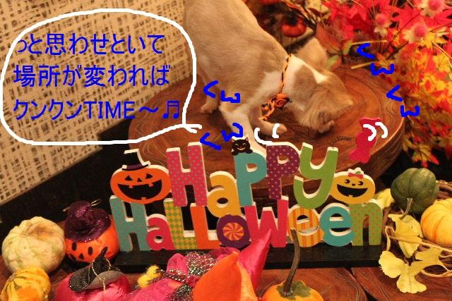 本日11月1日で、犬濯屋 川村は「5周年」を迎えました!!_b0130018_2073217.jpg