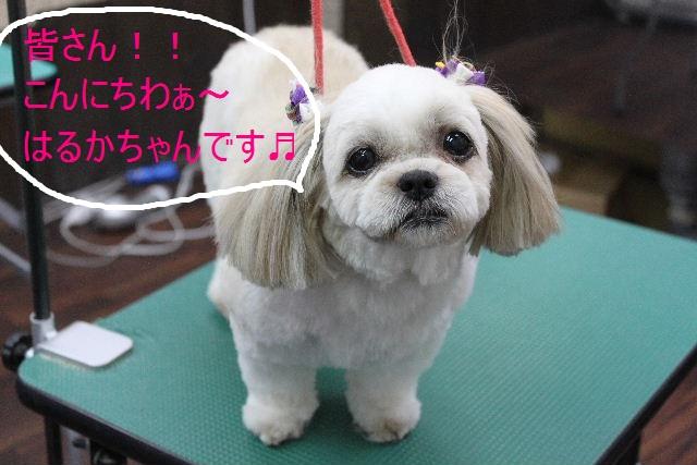 本日11月1日で、犬濯屋 川村は「5周年」を迎えました!!_b0130018_2084650.jpg