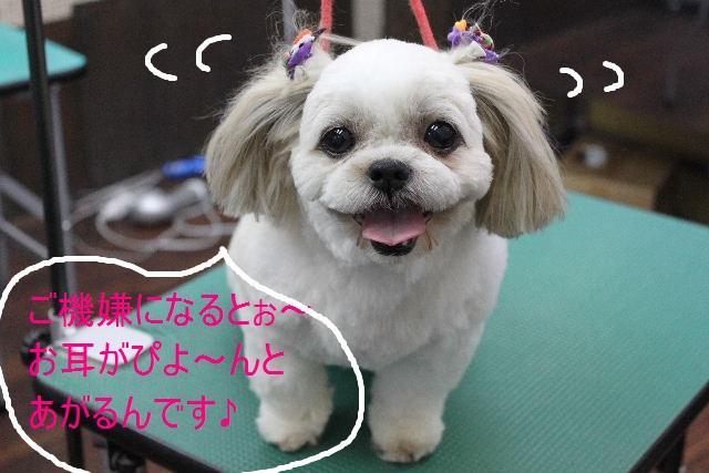 本日11月1日で、犬濯屋 川村は「5周年」を迎えました!!_b0130018_2085176.jpg