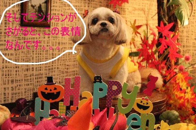 本日11月1日で、犬濯屋 川村は「5周年」を迎えました!!_b0130018_2085668.jpg
