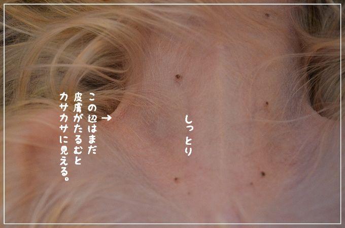 d0179828_2012549.jpg