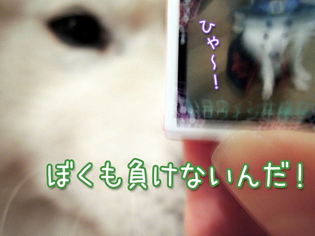 c0062832_8415762.jpg