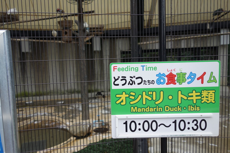 横浜市立野毛山動物園~FPD International 2013 その7_a0287336_257790.jpg