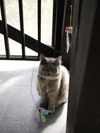 猫のお友だち たびおくんシソちゃん編_a0143140_19262332.jpg