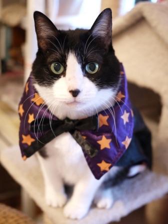 ハロウィン猫 空編。_a0143140_1934753.jpg