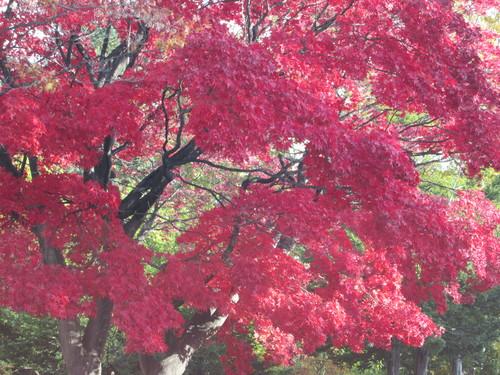 10月31日  晴れ  S・D-76  北海道札幌北広島_a0196542_2063285.jpg