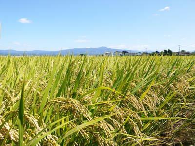 平成25年度新米 熊本の豊かな自然が育む、美味しいお米「七城米」好評発売中!!_a0254656_170329.jpg