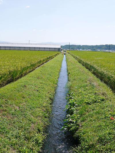 平成25年度新米 熊本の豊かな自然が育む、美味しいお米「七城米」好評発売中!!_a0254656_17214929.jpg