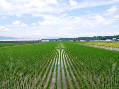 平成25年度新米 熊本の豊かな自然が育む、美味しいお米「七城米」好評発売中!!_a0254656_17403859.jpg