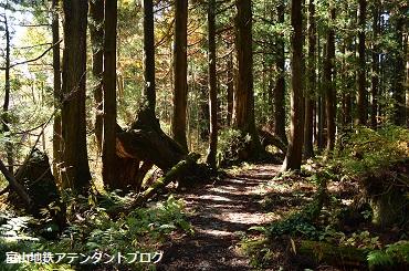 紅葉の森、美女平_a0243562_18204118.jpg