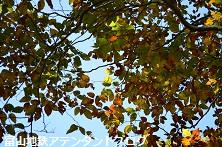 紅葉の森、美女平_a0243562_18211478.jpg