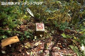 紅葉の森、美女平_a0243562_18214254.jpg