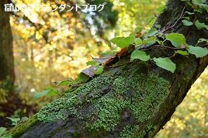 紅葉の森、美女平_a0243562_18215616.jpg