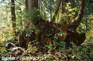 紅葉の森、美女平_a0243562_18222183.jpg