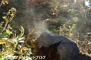 紅葉の森、美女平_a0243562_18224523.jpg
