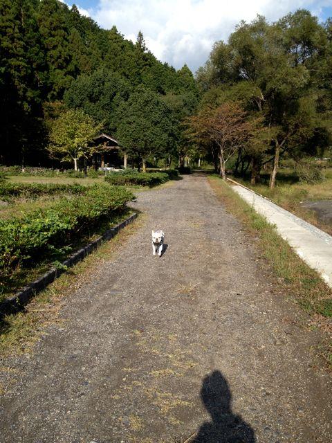 楽しかった10月キャンプ♡ Vol.4_a0239065_1428879.jpg