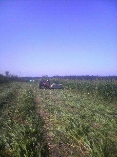 「牧草刈り終了」_e0063268_1858371.jpg
