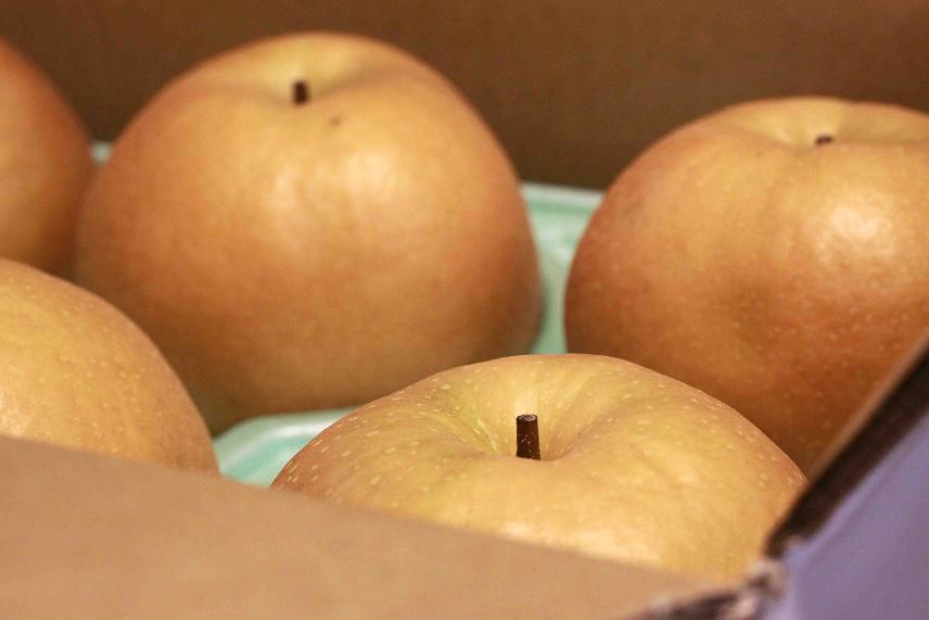 この梨は美味しいですよ♪^^_a0107574_23232495.jpg