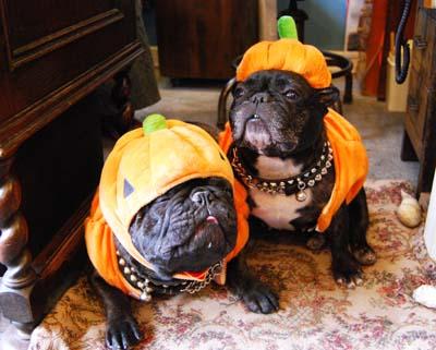 Happy Halloween!!_f0155891_1622338.jpg