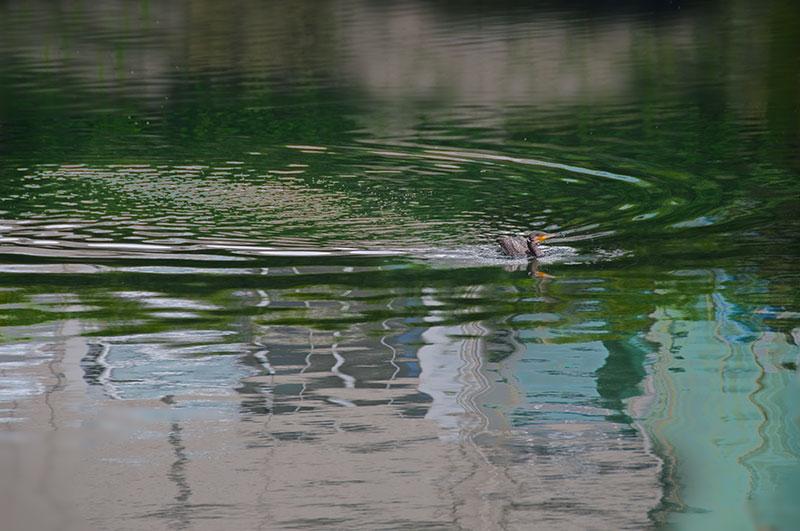 記憶の残像-571  神奈川県横浜市 京浜運河-4_f0215695_11354216.jpg