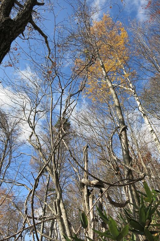 10月31日、定山渓小天狗岳、夕日岳と朝日岳-その1-_f0138096_2265793.jpg