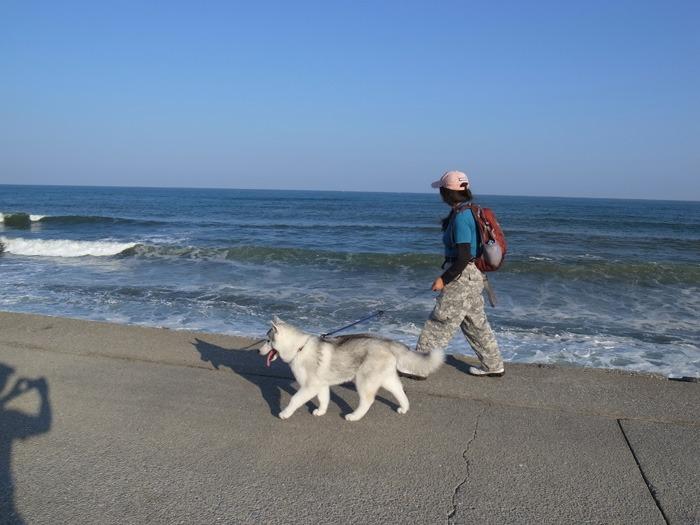 はなちゃん太平洋を見る_c0049299_2011279.jpg