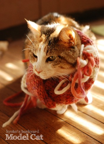 モデル猫、Sandy_b0253205_434054.jpg