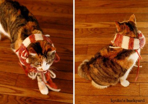 モデル猫、Sandy_b0253205_4351373.jpg