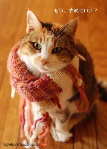 モデル猫、Sandy_b0253205_436671.jpg