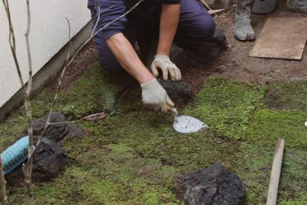 中庭の苔を敷きました_f0170331_17193560.jpg
