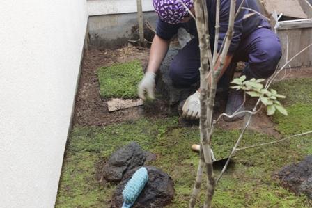 中庭の苔を敷きました_f0170331_17195988.jpg